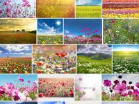 Фото для фотообоев с цветами